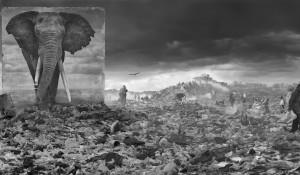 """原寸大の動物たちが""""かつての住処""""に帰還する。 写真家 Nick Brandt(ニック・ブラント)最新写真作「Inherit the Dust」"""