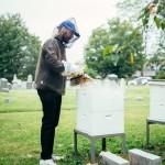 ブルックリンのローカル蜂蜜は巨大墓地生まれ!? 580万体が眠るお墓でハチミツ・ビジネスはじめました