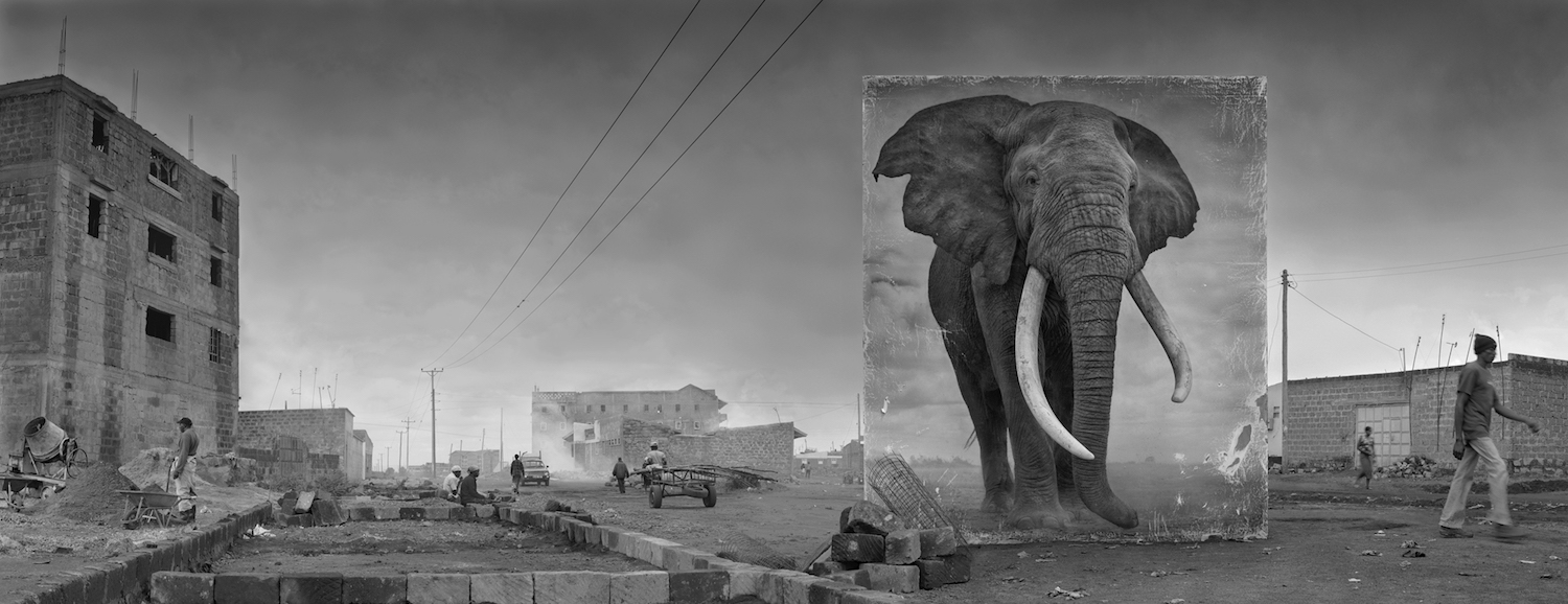 ROAD WITH ELEPHANT