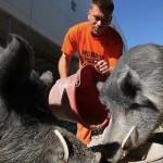 飼育員は囚人たち。フロリダのワケありな「刑務所動物園」