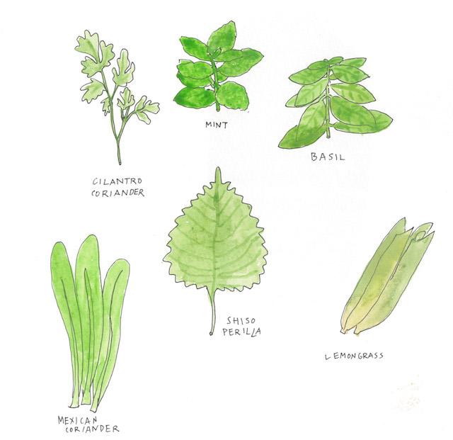 vietnam herbs
