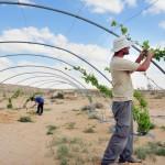 """砂漠の田舎町を「スタートアップで現代版へ」イスラエルの共同体コミューンKIBBUTZが目指す""""資本主義でみんな平等にしあわせ"""""""
