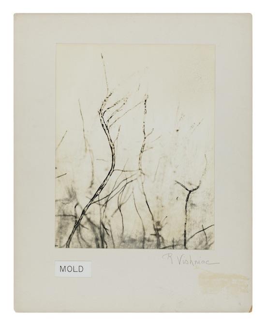 9_Mold_1