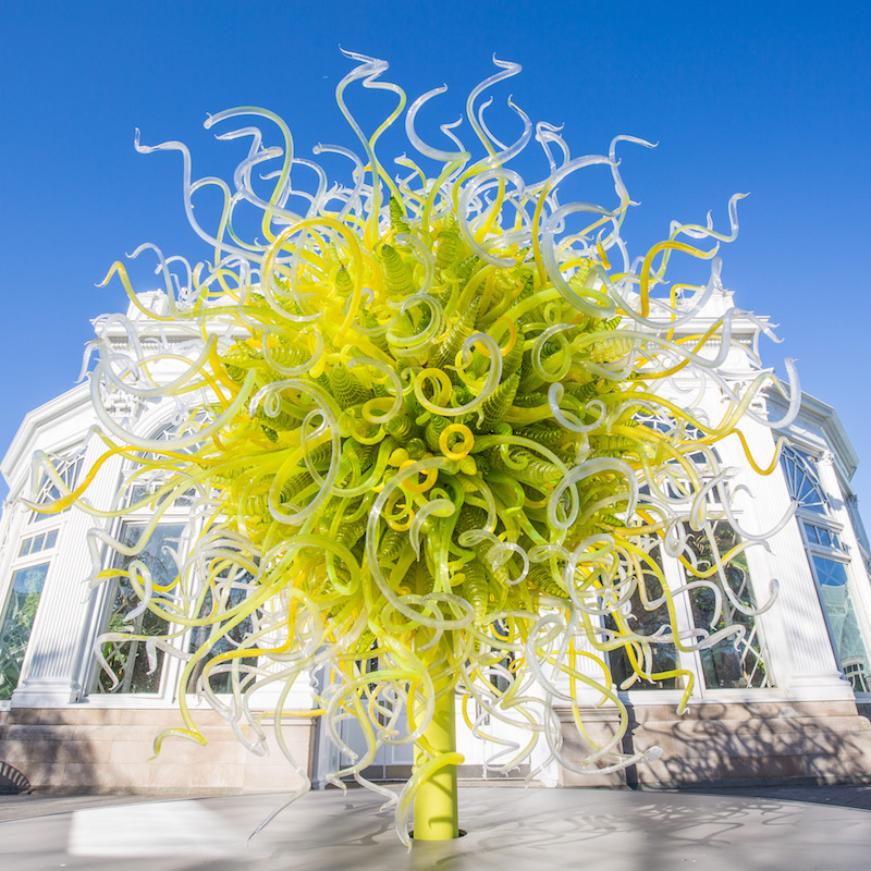 NYBG_CHIHULY_16-Sol_de_Citron_2017