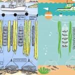 """次世代の燃料は「わかめちゃん」 """"藻の起業家に、藻のコミュニティーファーム""""で藻の一大市場が築かれる?"""