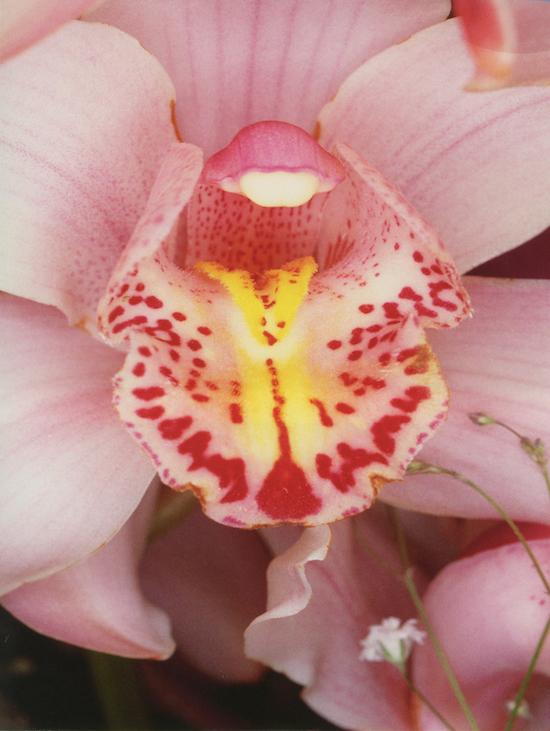 Nobuyoshi Araki_Flowers, 1985_Courtesy of Private Collection