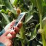 """増加する「大卒、オフィスデスクから農場へ」。畑に持ち込む新たなビジネス、""""高学歴農家""""たちの農業改革"""
